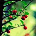 Magical Garden :. by estellamestella