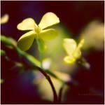 The Shadow Flower by estellamestella