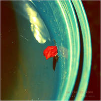 la vie en rose by estellamestella