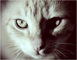 Rebellious Cat by estellamestella