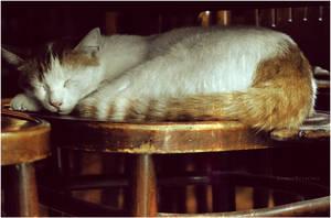 The Sleeper Cat :. by estellamestella