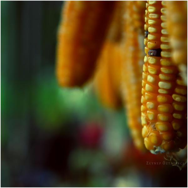 yellow :. by estellamestella