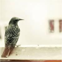 mini mini bir bird. by estellamestella