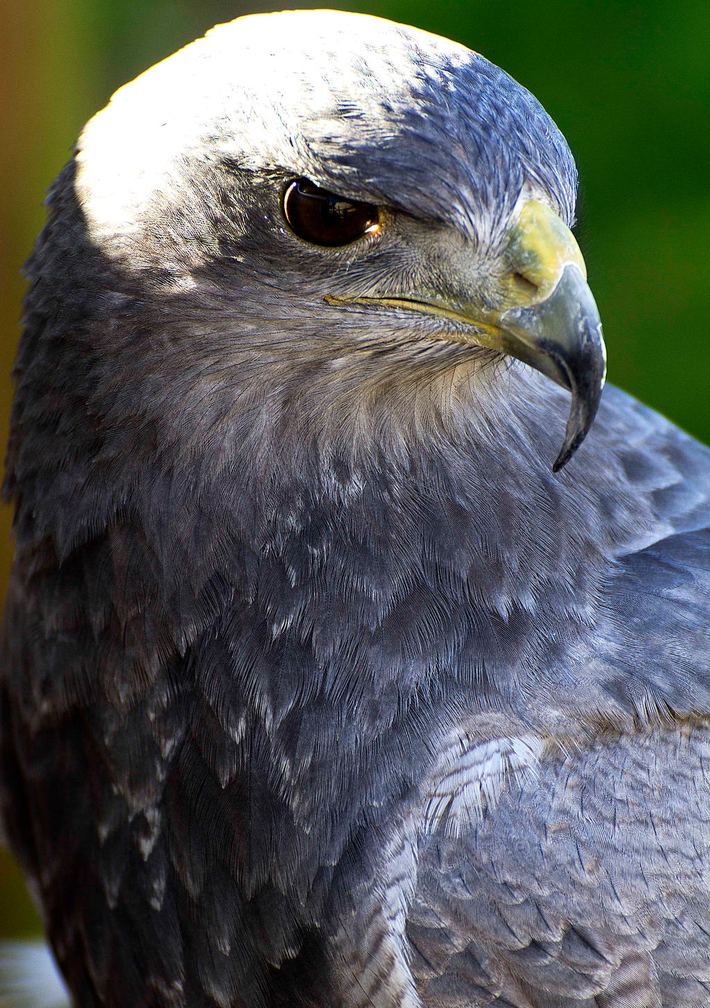 grey eagle chat Click to email this to a friend (opens in new window) click to share on facebook (opens in new window) click to share on twitter (opens in new window.