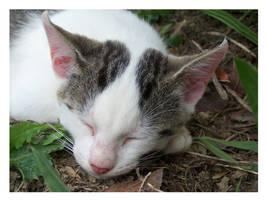 kitty.... by Saysamia