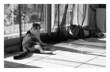 b and w catz by Saysamia