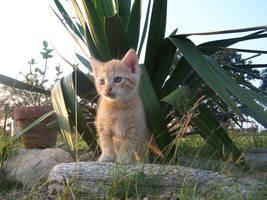 Ginger kitty by Saysamia