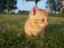 Ginger kitty 3 by Saysamia