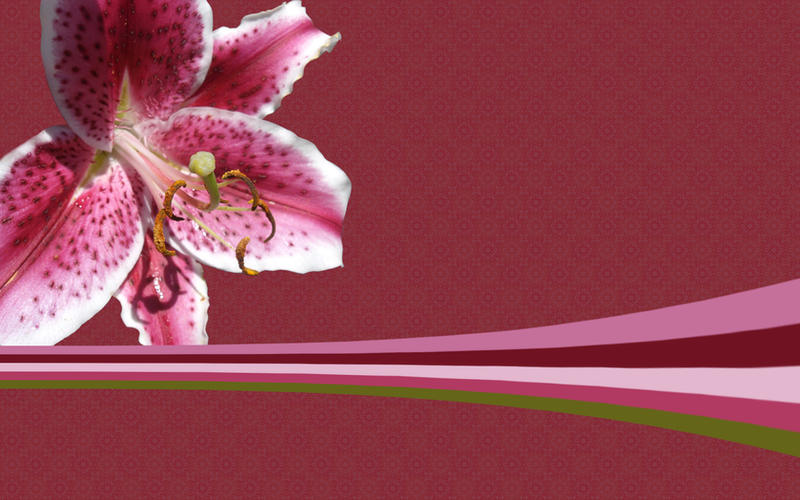 Pink Floral and Patterns by surfing-ant