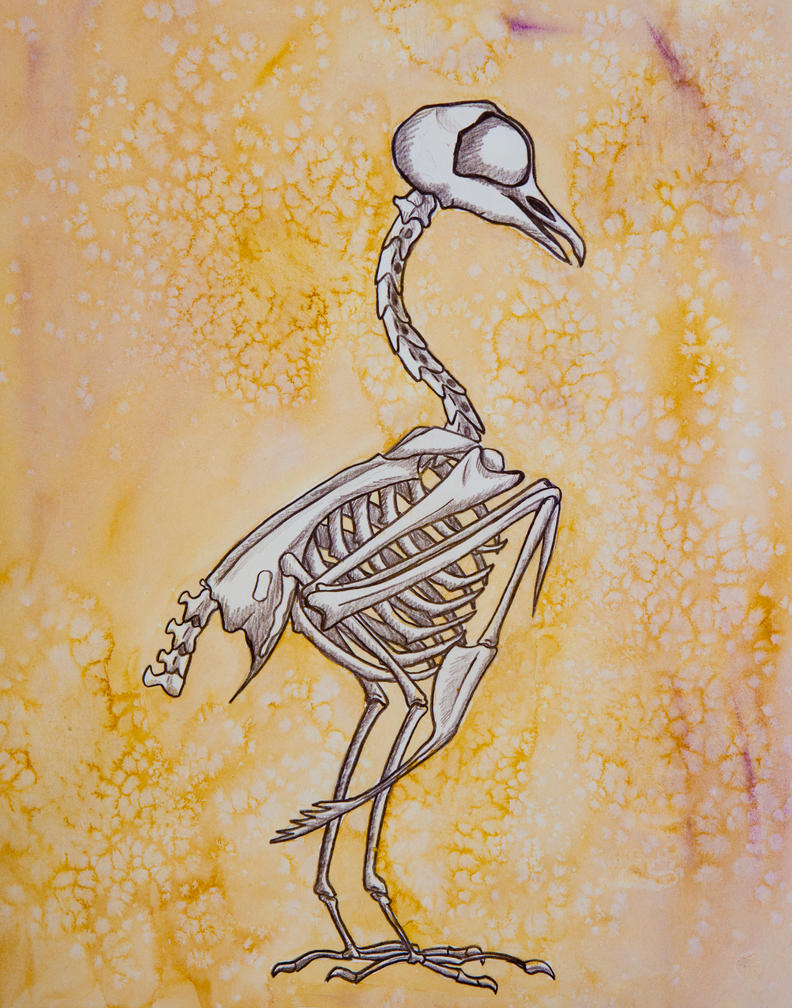 Pigeon bones by owlburrow
