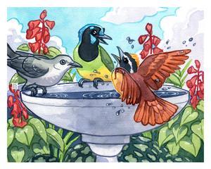 Birdbath Drama