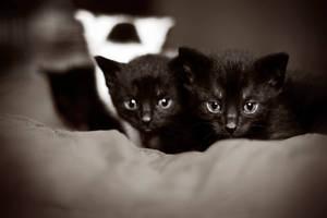 My Black Kitty Cat by 1x1x1x1x1x1x1x1x1x1