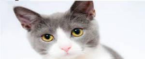 My Cat by 1x1x1x1x1x1x1x1x1x1