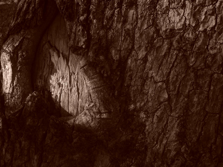 Wooden Cavern