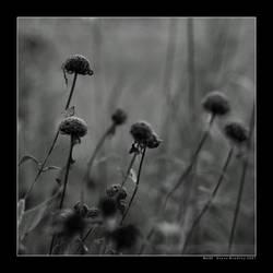 Still by DarknessAndLight