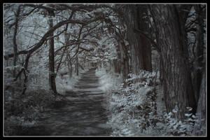 Path of Memories by DarknessAndLight