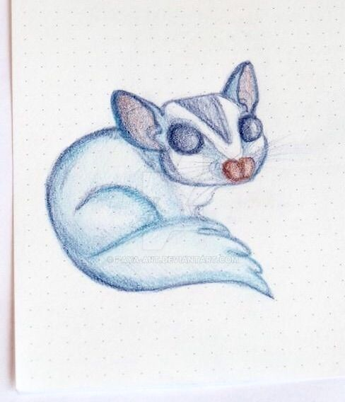 Sugar glider by Paya-Art