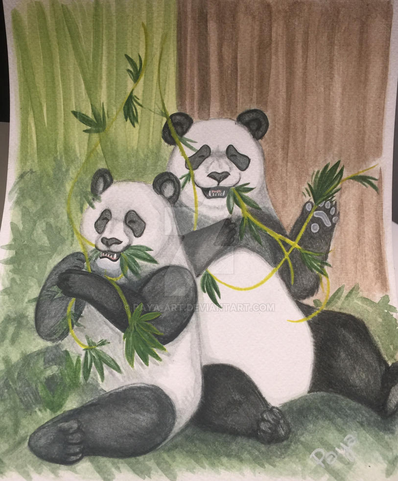 Pandas by Paya-Art