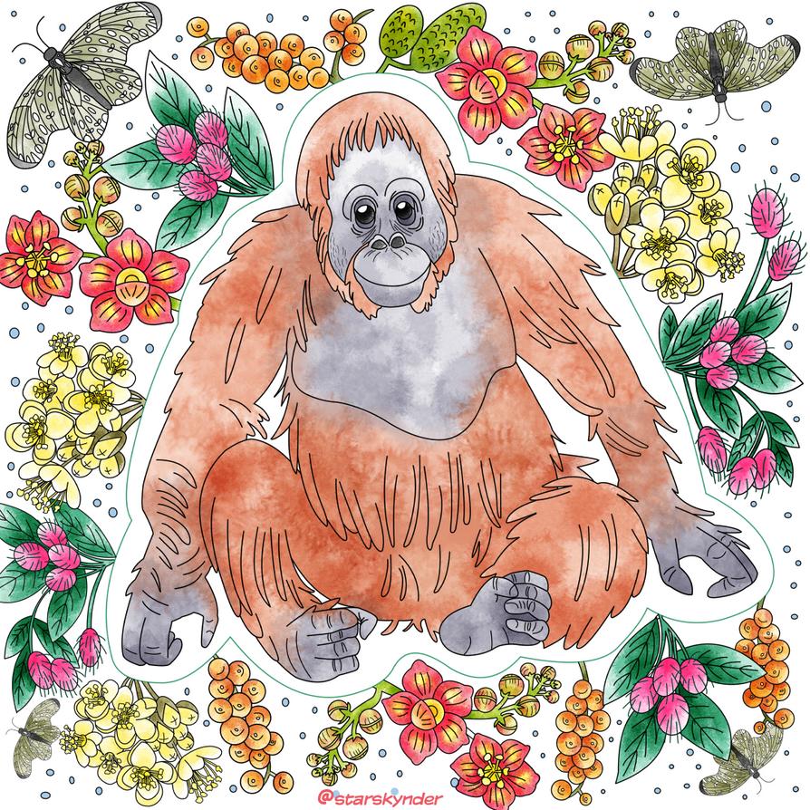 Orangutan by starskynder