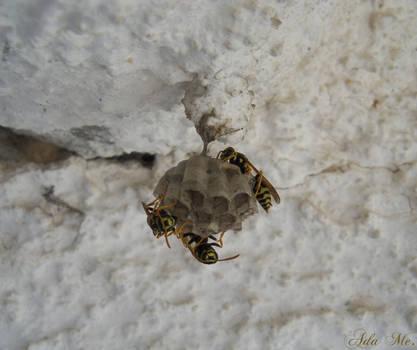 Bees by AdaEtahCinatas