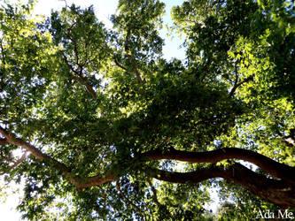Under A Tree by AdaEtahCinatas