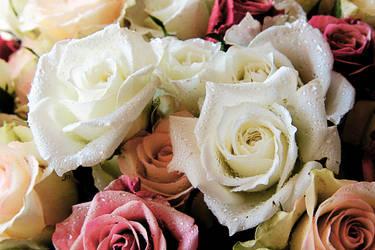 Roses, 2010 by ottenjr