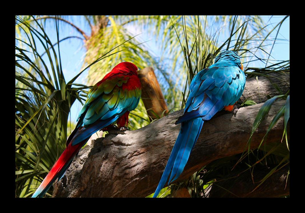 Colourful Companions by kemicalimbalance