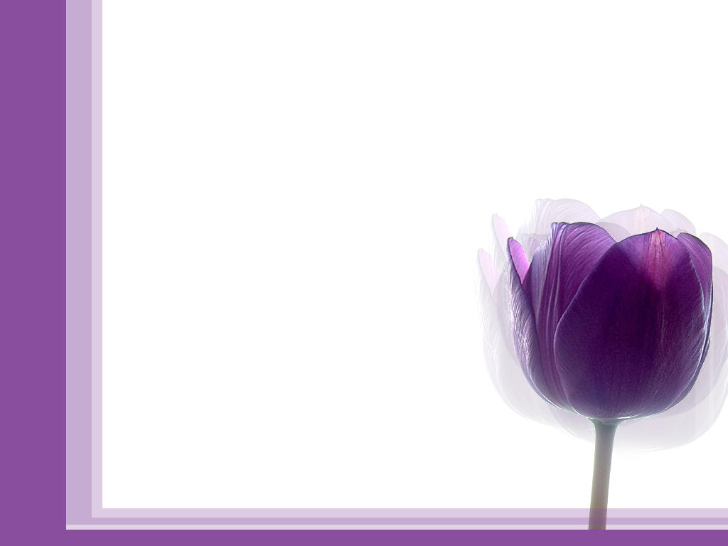 Purple Tulip Simple by becka72