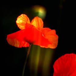 Crimson by sidh09