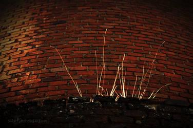 Brickyard 4