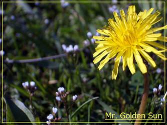 Mr. Golden Sun