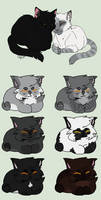 Kitten Adoptables: Open by RollDown