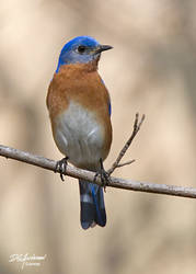 Finally a Blue bird by DGAnder