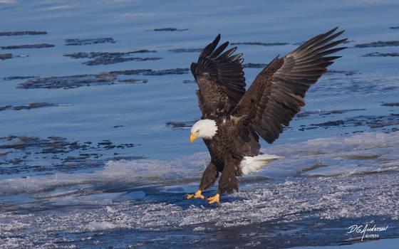 Eagle ice landing