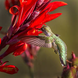 Yet another Hummer