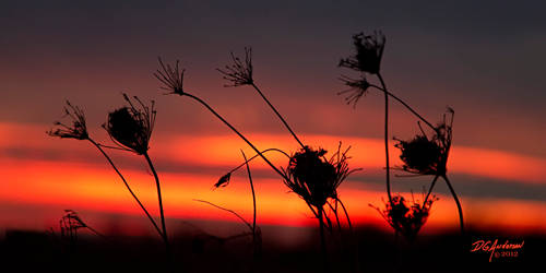 Nov-02-weeds-sunset
