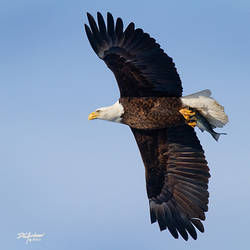 EAgle-Fish-flyby-12x12-7659-WEB
