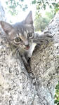 AAA Kitty has stuck in tree