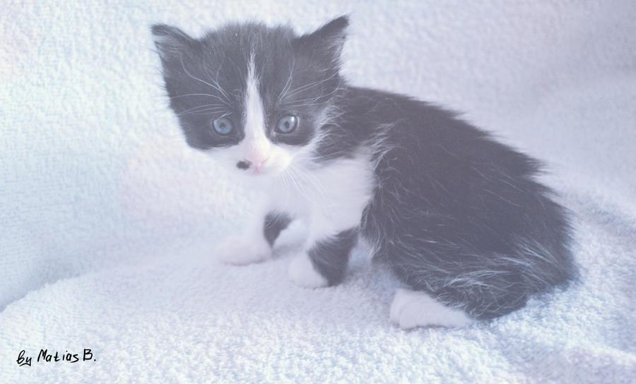 Kitten 2 by MatiasBloodbones