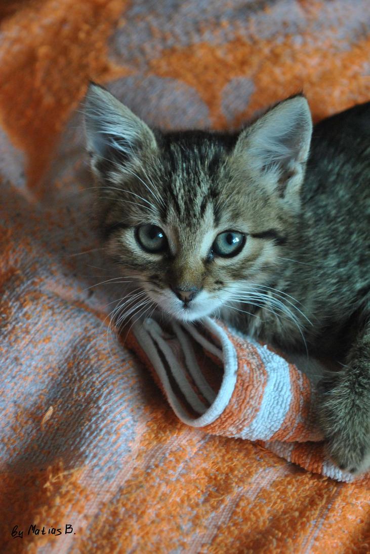 Kitten 21 by MatiasBloodbones