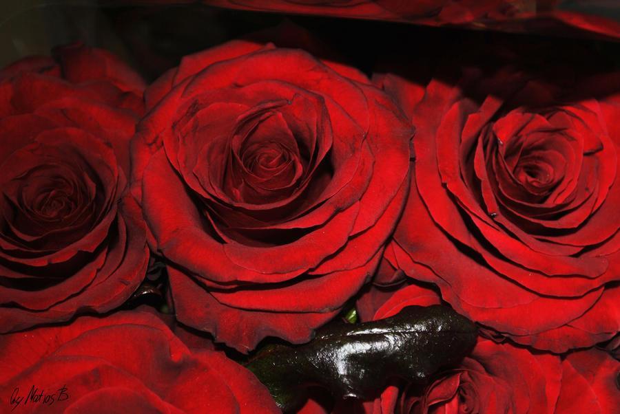 Roses by MatiasBloodbones