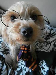 Puppy Potter by ShazzSaysRawr