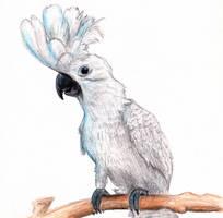 Cockatoo by SureTina