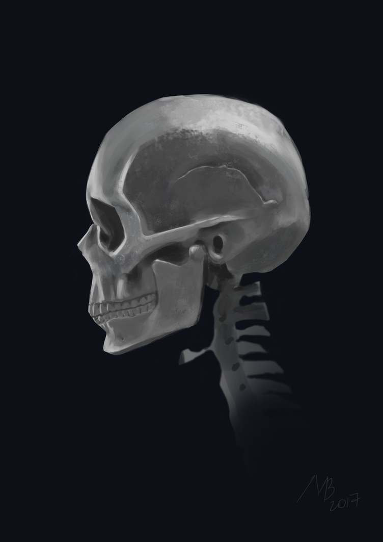 Skull study by BlueberryMarina