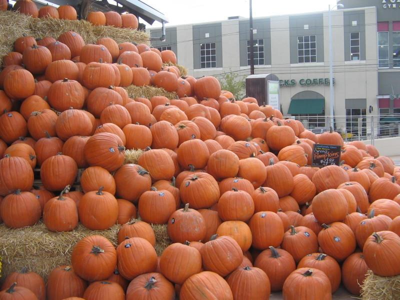 Pumpkins galore by comeonandvogue7