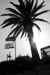 Palm tree in black and white by coffeenoir