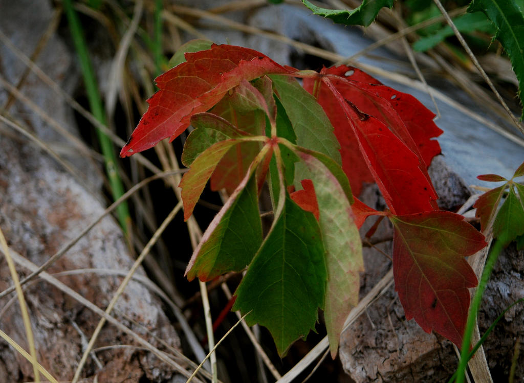 Autumn Returns by coffeenoir