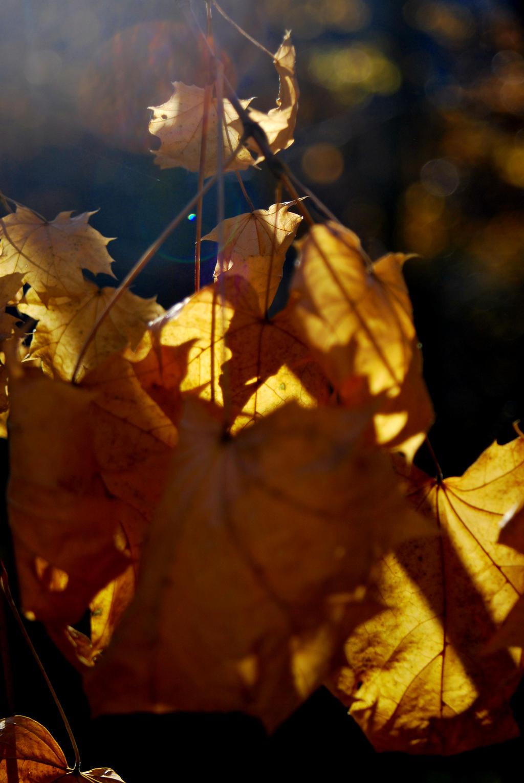 Sunlit Leaves by coffeenoir