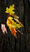 Last Leaves to Fall by coffeenoir