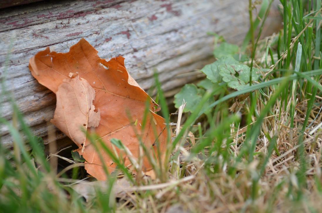 Resting Leaf by coffeenoir